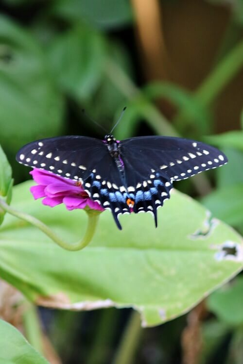 A Visit From A Bright Blue Butterfly