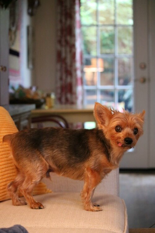 Charlie Update & A Reader's Loss & Grief