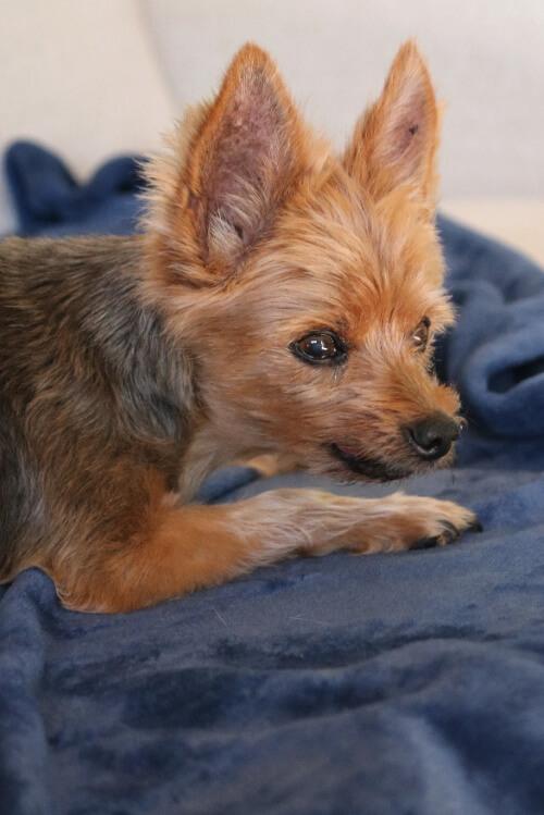 Pet Care Giver Burden