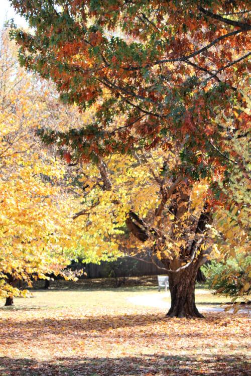 Woodward Park Fall Photos 2020