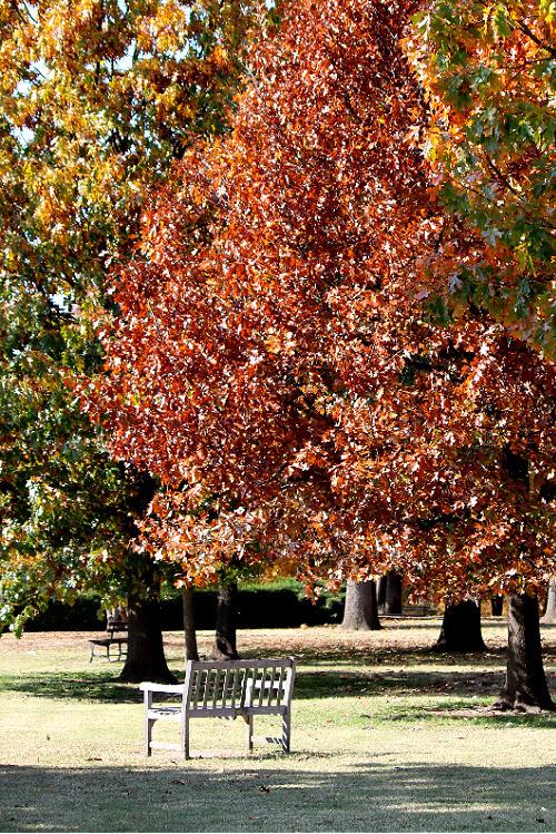 Gorgeous Fall Leaves & A Trip To Southwood's Nursery