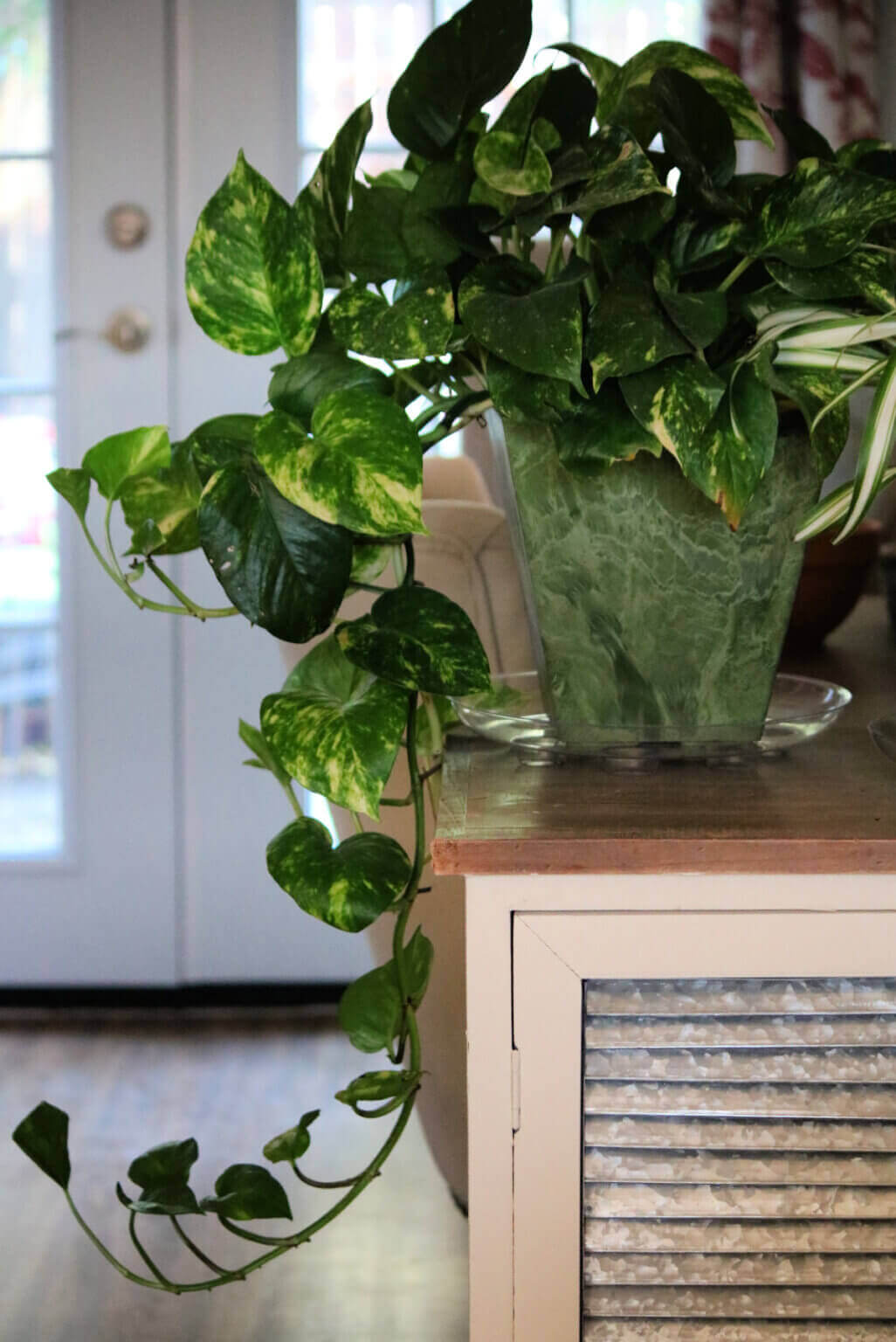 House Plants Lift Your Mood During These Trying Times
