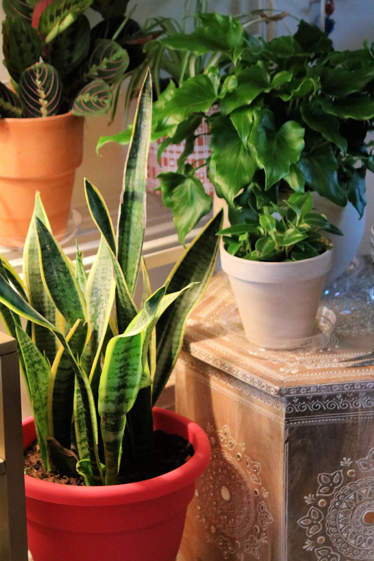 What I Did Different With My Container Plants Last Fall