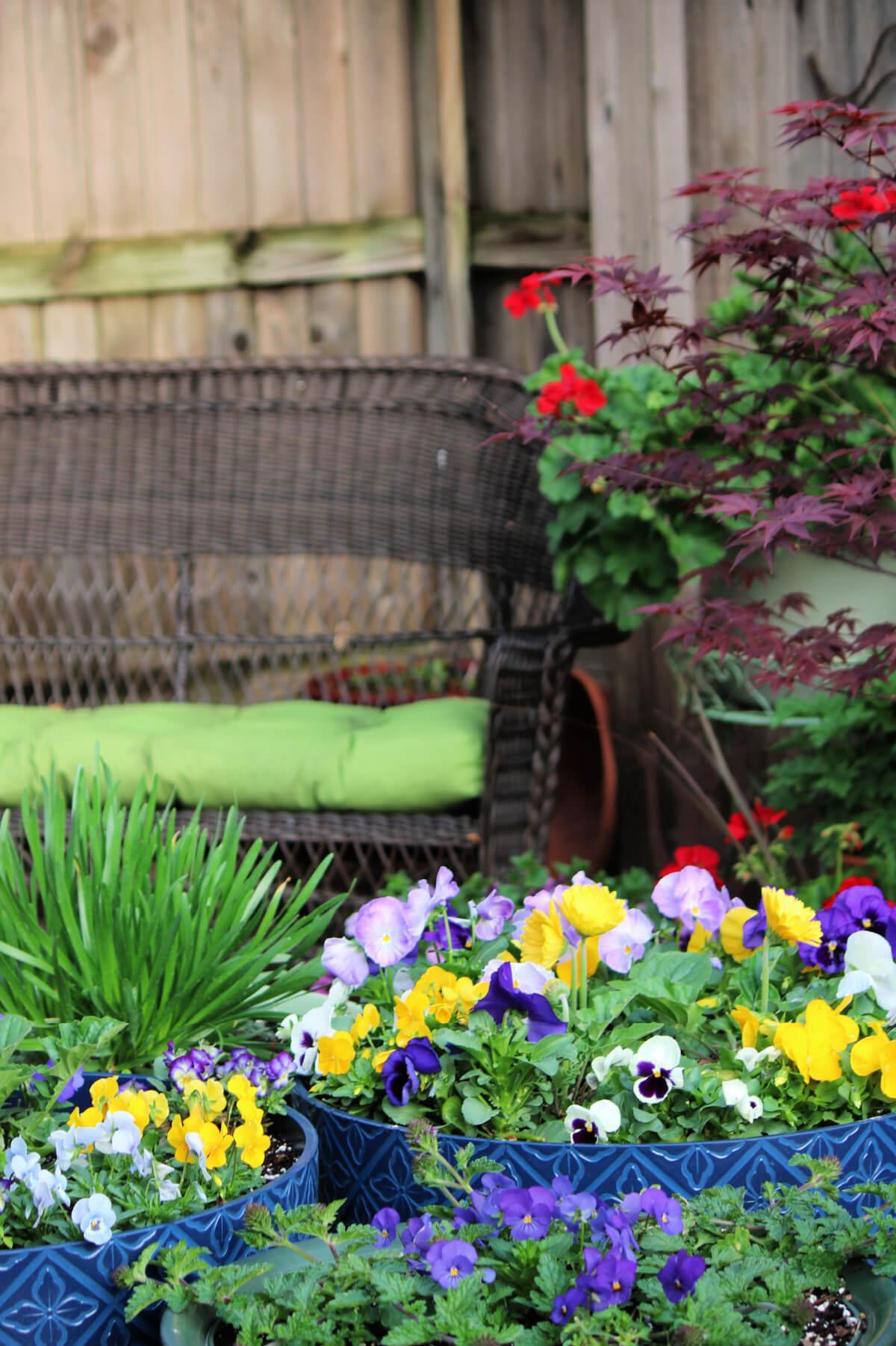 Status Of The Patio Garden: April 26, 2021