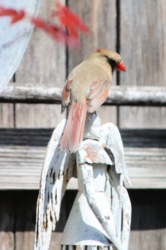 Cardinal Couple, PT & What I'm Reading