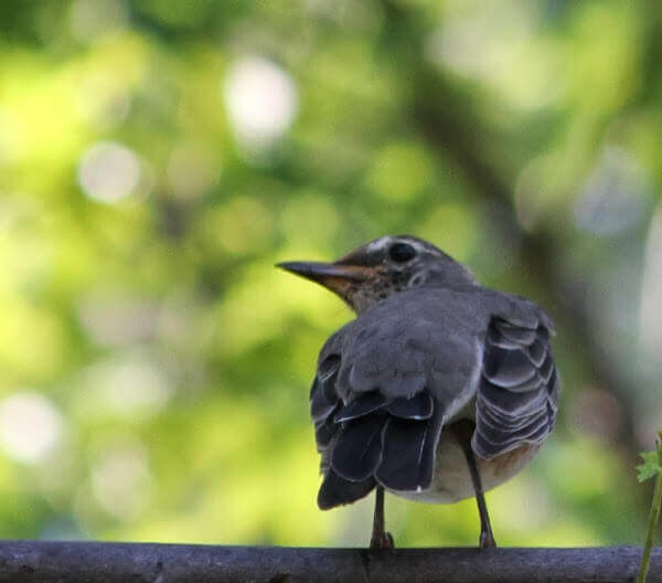 A little bird perched on the fence