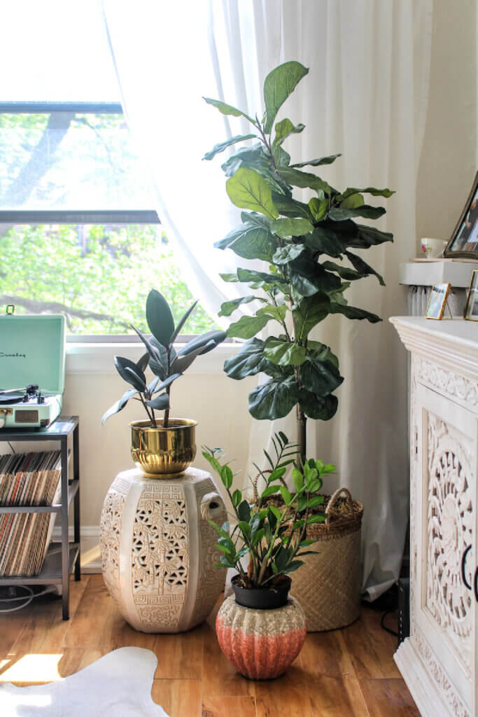 Light-filled room with house plants of various sizes