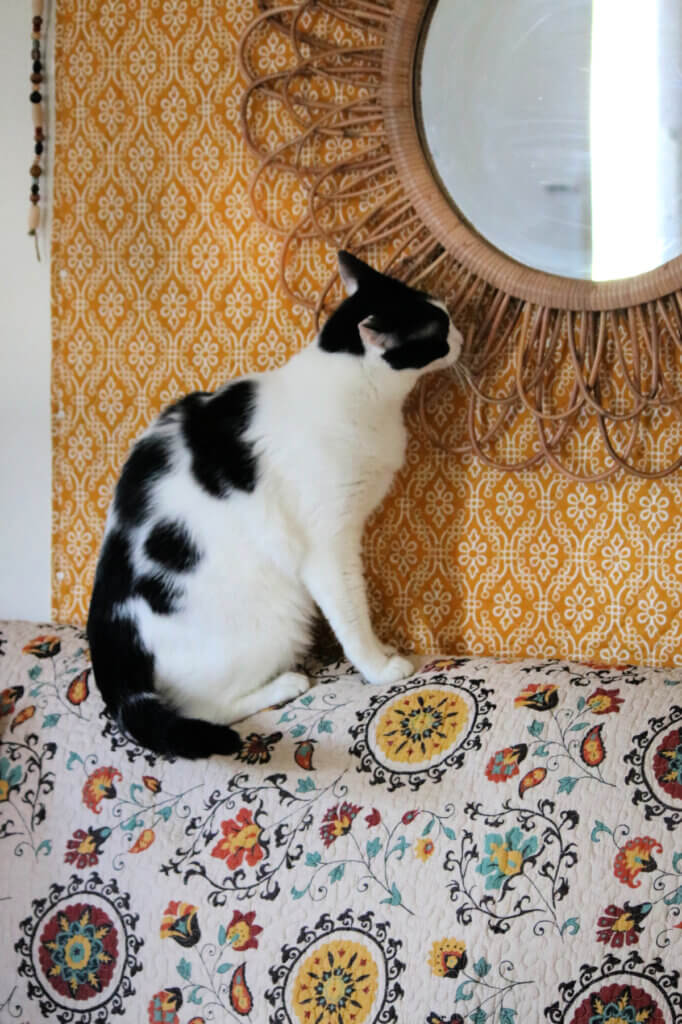 My black and white cat Ivy on top of the couch sniffing the boho mirror
