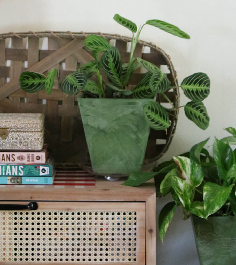 House plants and a boho style cupboard in my living room