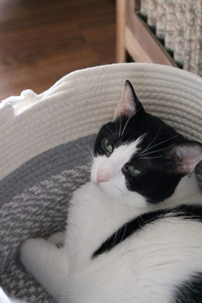Ivy in her basket I bought her at Tuesday Morning in my new and notable mentions August 28, 2021