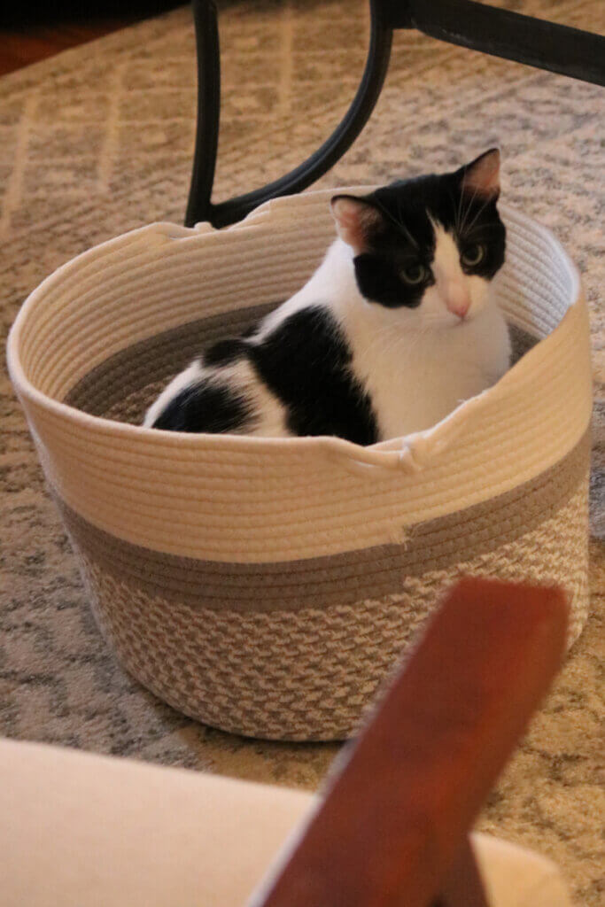 Ivy in her rope basket I bought for her