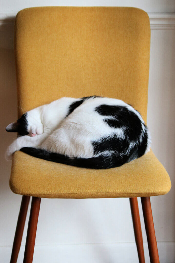 My cat Ivy sleeping on one of my dining room chairs