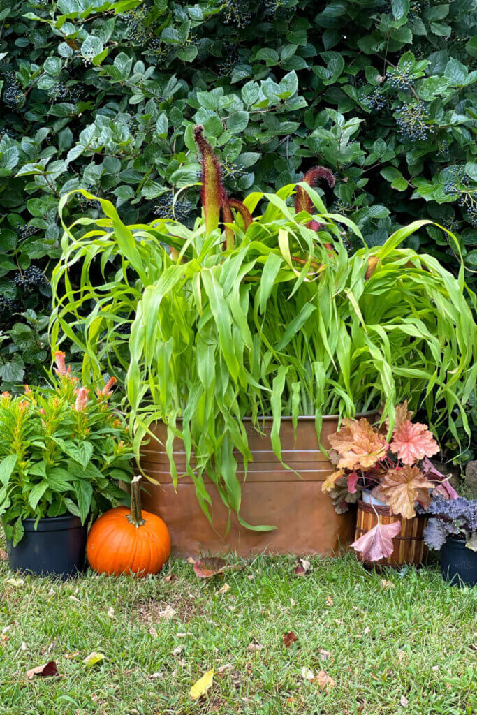 Fall garden in a flea market container