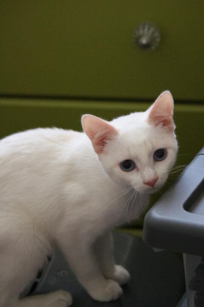 Wednesday, September 29 2021 update of kitten Gracie.
