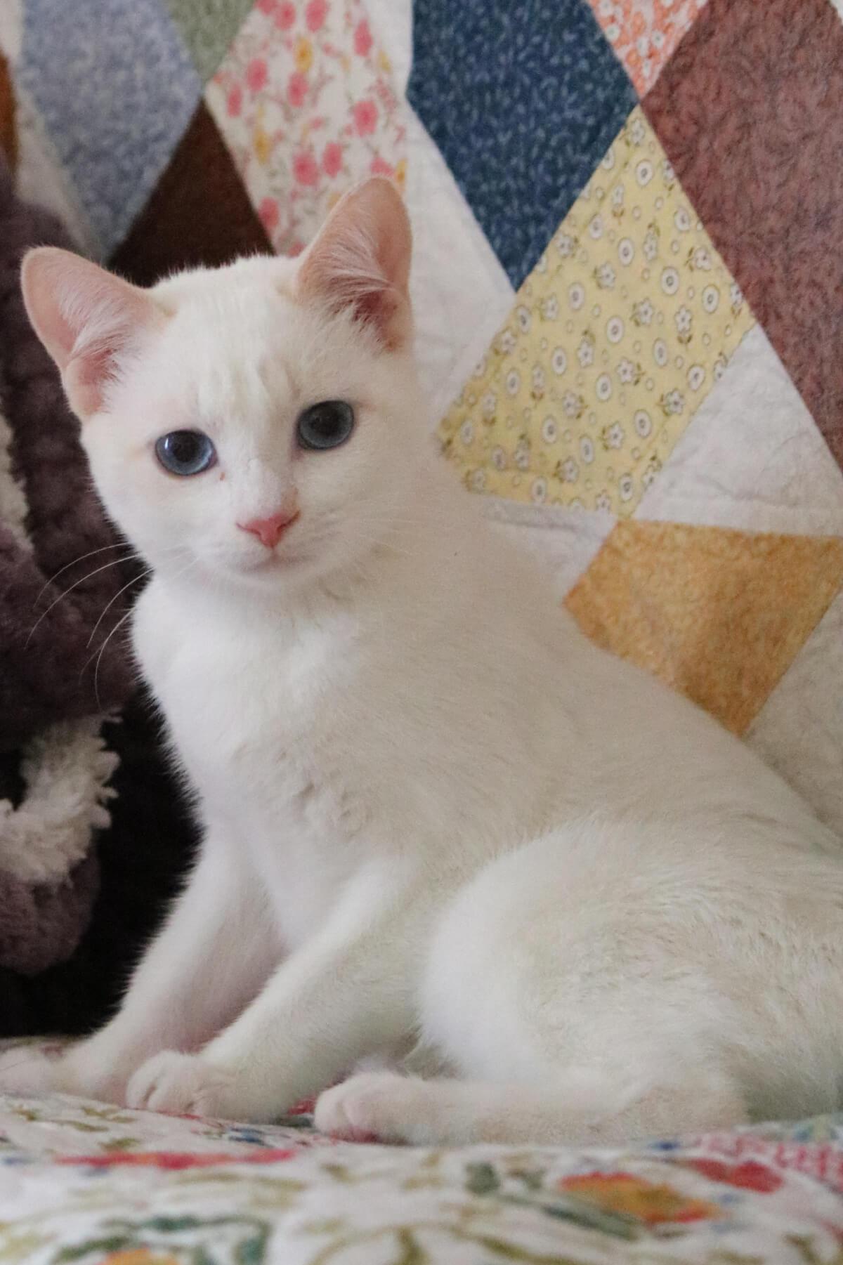 Wednesday Kitten Update & Mourning Doves
