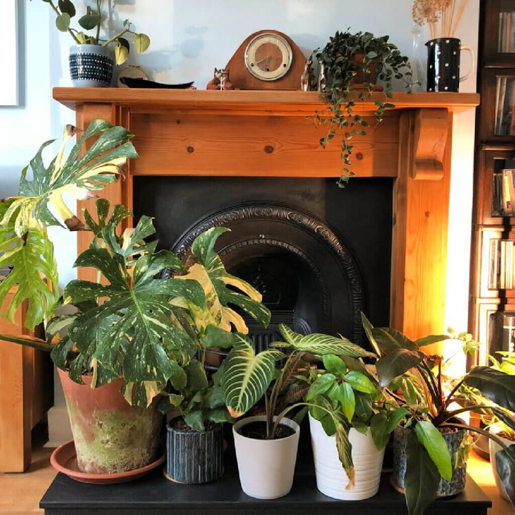 Jane Perrone has 10 ways to make your house plants more sustainable