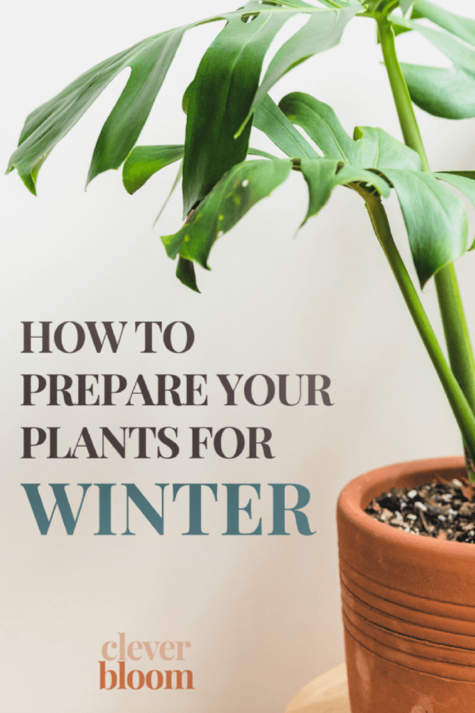 Instructions for How To Prepare Your Plants For Winter for New & Notable Mentions