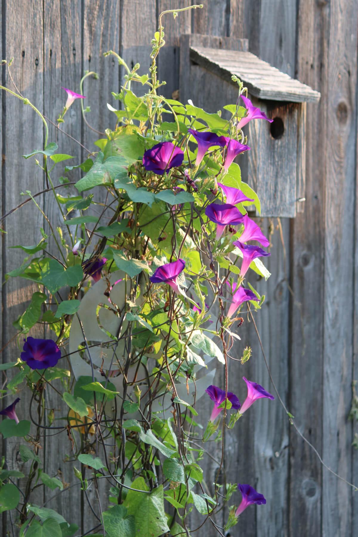 My Desire For Purple Flowers In The Garden