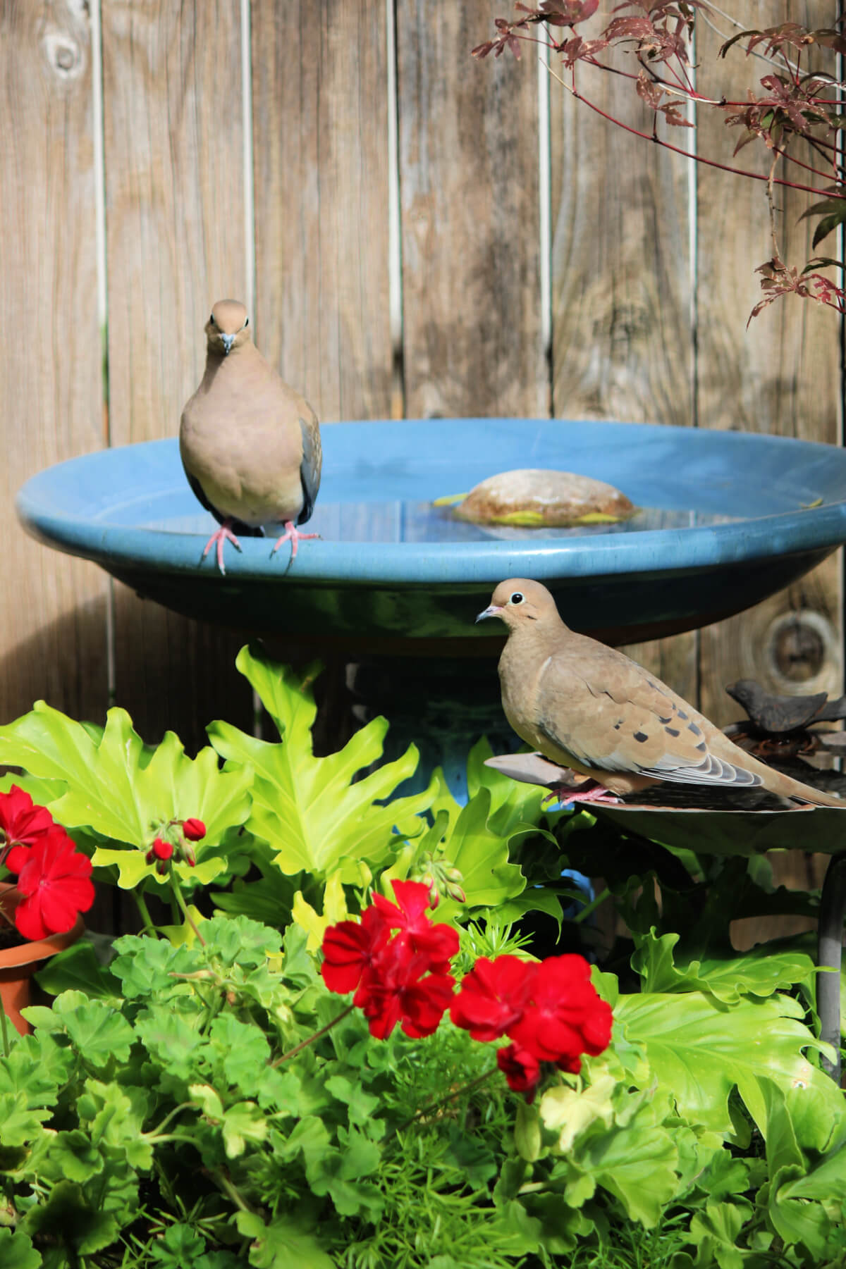 Recent Patio Birds That Visited Me